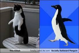 Meme Socially Awkward Penguin - this kitteh totally looks like socially awkward penguin totally