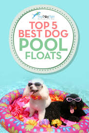 top 5 best pool floats for dogs to swim on u2013 top dog tips