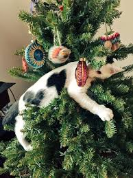 cat christmas adorable cats who are excited about christmas trees