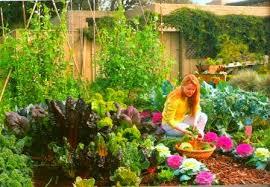 vegetable garden vegetable gardening tips and planting a garden