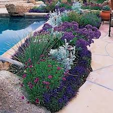 Pool Landscaping Ideas Best 25 Landscaping Around Pool Ideas On Pinterest Plants