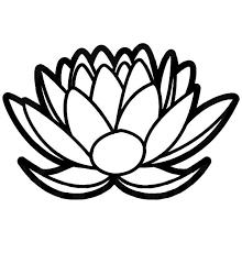 610 best gardening lotus images on pinterest lotus flowers