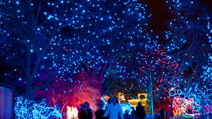 denver zoo lights hours zoo lights denver zoo holiday lights zoo and animals