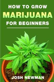 Beginners How To Grow Just by How To Buy Pot Online How To Grow Weed Indoors