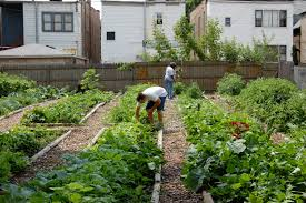 unique vegetable garden ideas christmas ideas free home designs