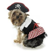 halloween dog background all dogs breed 2010 trendy dog halloween costumes