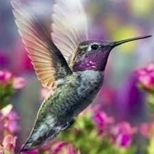 hummingbird flowers diy diamond msaic 5d animals hummingbird flowers diamond