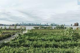sold out planning an urban vegetable garden u2014 brooklyn grange