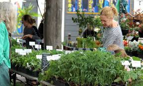 native plants nursery melbourne the best places to buy plants in sydney concrete playground sydney