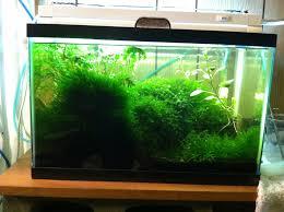 best led light for planted tank aquarium lighting information guide reef planted par pur pas