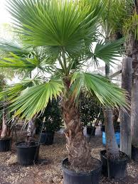 all about palm trees with local expert o j miller