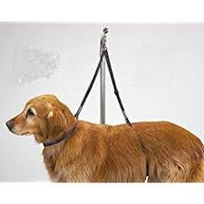 dog grooming tables for small dogs no sit haunch holder dog grooming restraint small medium dogs