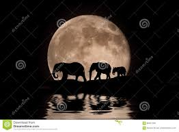 family of elephants in the moonlight silhouette stock image image