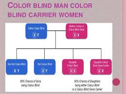 Colour Blind Percentage 100 Can Girls Be Color Blind Prevalence And Gene Frequency