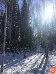 find the perfect christmas tree in utah the salt project