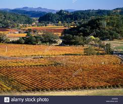 Shades Of Red Color Usa California Napa Valley Calistoga Fall Color In Shades Of