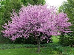 impressive decoration small trees for landscaping sweet top 10