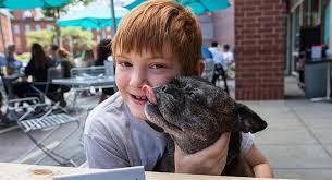 Dog Patio The 21 Best Dog Friendly Restaurant Patios In Boston