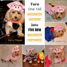 save money this halloween re purpose an old costume