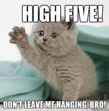 Success Cat Meme - cat congrats meme