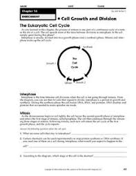 cell growth and division worksheet test prep pretest answers 28
