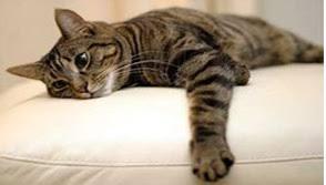 urine de sur canapé mon a fait pipi sur le canapé tout pratique