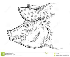 pig head engraving style vector illustration stock vector image