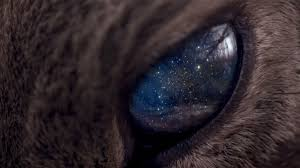 cat universe wallpaper wallpaper face cat animals eyes galaxy space stars fur