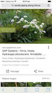the most poisonous plants in australia hipages com au 230 best garden ideas images on pinterest facades front fence