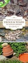 best 25 frog habitat ideas on pinterest frog terrarium reptile