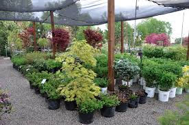 auburn mi nursery with a wide variety of landscaping plants