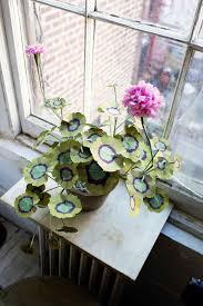 Best Houseplants House Plants Indoor Plants For Your Home Damblyus Garden Center