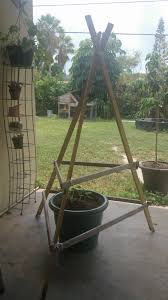 build your own teepee trellis for your summer squash