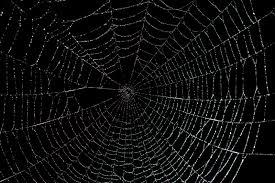 halloween photoshop background spider web backgrounds wallpapersafari