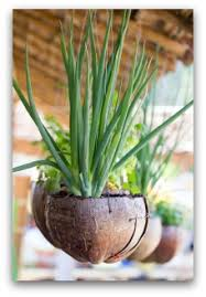 herb container gardens indoors or outdoors vegetable gardening