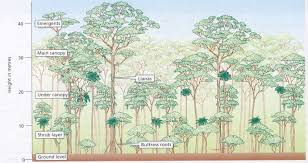 Plant Adaptation In Tropical Rainforest Tropical Rainforest By Kaisha Wandei On Prezi