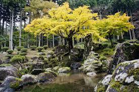 Family Gardens File Suwa Yakata Ato Garden Of Ichijodani Asakura Family Historic