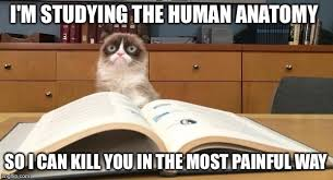 Studying Meme - grumpy cat studying meme generator imgflip
