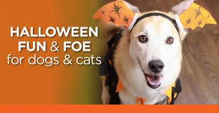 nationwide pet healthzone