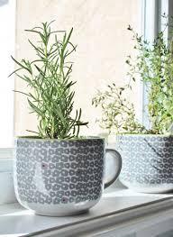 herb pots for windowsill coffee mug herb planters u2014 house for six