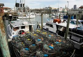 boats sit idle as algae threatens dungeness crab season naples