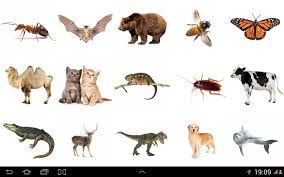 south american animals for kids