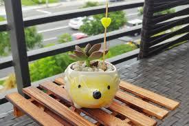 hedgehog succulent planter cute ceramic animal pot mini