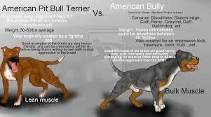 american pit bull terrier history xxl blue bully pitbull breed xl bullies pitbulls history