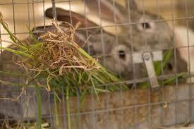 world rabbitry