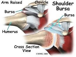 Muscle Anatomy Of Shoulder Shoulder Anatomy Eorthopod Com