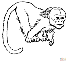curious uakari monkey coloring page free printable coloring pages