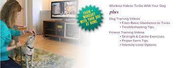 make fitness fun u2014 workout with your dog feet u0026 paws