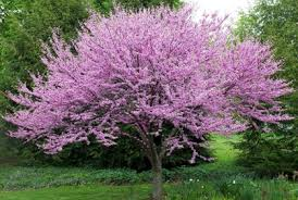 interesting decoration trees for landscaping magnificent types of