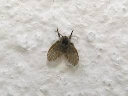 Download Small Flies In Bathroom Gencongresscom - Small flies around kitchen sink